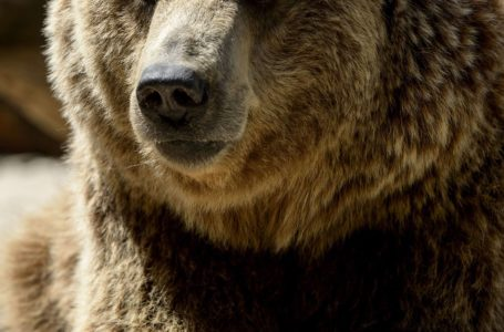 Investing Rules To Bend In A Bear Market