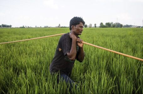 Loan waivers: Not a panacea for farm misery